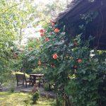 Restaurant Nunti, Botezuri - Sala Evenimente Timisoara - Aranjamente Sala 101
